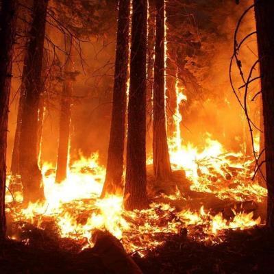 طرطوس.. إخماد 49 حريق دون خسائر بشرية ودون تسجيل حالات نزوح